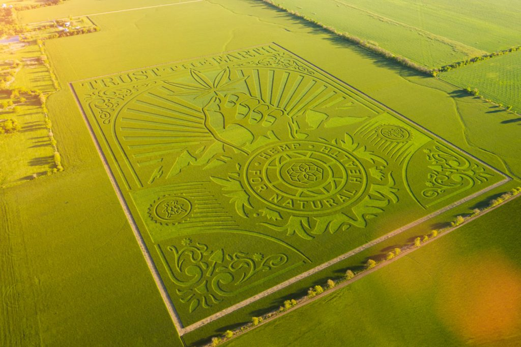 Wheat Field Serves As Blank Canvas For Artist Shepard Fairey's Hemp-Inspired Latest Work